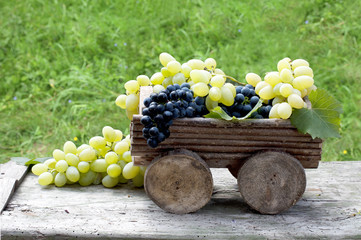 Big clusters of ripe blue and green grapes in a wooden cart