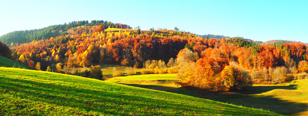 Wald im Herbst - Abendsonne