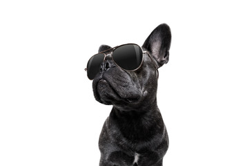 pozowanie pies w okularach przeciwsłonecznych