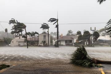 Zalane Las Olas Blvd i palmy wiejące wiatry, katastrofalny huragan Irma.