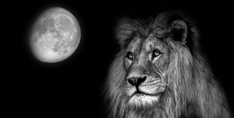 Black  and white portait lion with moon