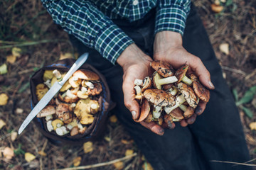 Man holds an handful of oily mushrooms