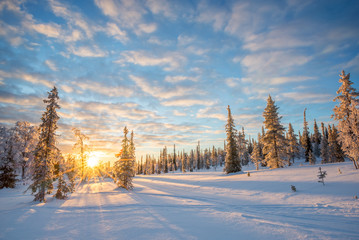 Snowy landscape at sunset, frozen trees in winter in Saariselka, Lapland, Finland. Christmas and holidays background