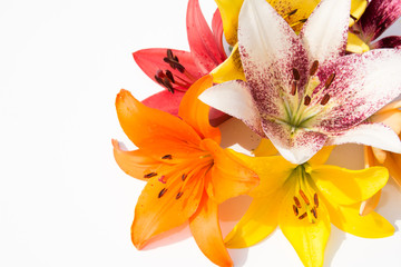 A bouquet of lilies. White background. Beautiful flowers.
