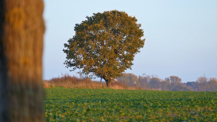The autumn landscape The tree is yellowed leaves