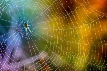 Rano krople rosy w pajęczynie. Pajęczyna w kroplach rosy. Piękne kolory w naturze makro