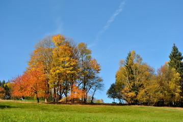 Jesienne drzewa na horyzoncie