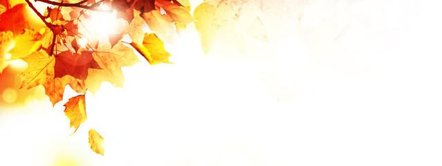 Goldener Herbst auf weissem Hintergrund