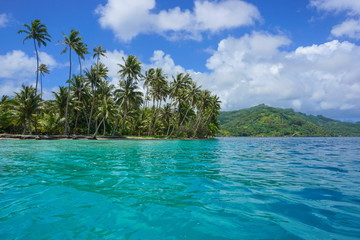 Wybrzeże kokosowe na Polinezji Francuskiej na motu Vavaratea z wyspą Huahine w tle, Faie, ocean południowego Pacyfiku, Oceania