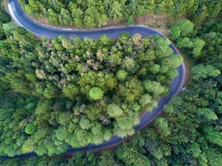 Bosque y carretera