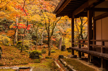 Jesienne liście świątyni Komyozen-ji