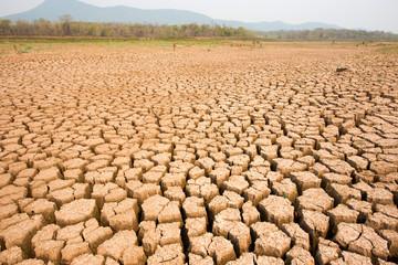 Arid soil with cracks