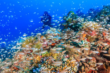 Tropical fish swarm around a vibrant, healthy tropical coral reef