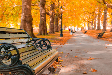Autumn concept, benches on an avenue lined with trees in Green Park of London
