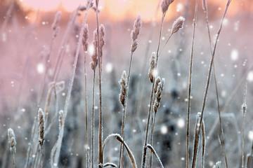 Zimowy krajobraz. Xmas tło z białymi płatkami śniegu. Światło słoneczne w zimowym lesie.