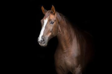 Red horse portrait on black background