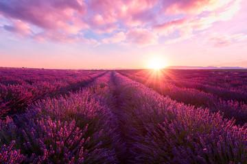 Lawendy pole przy zmierzchu światłem w Provence, zadziwiający pogodny krajobraz z ognistym niebem i słońcem, Francja