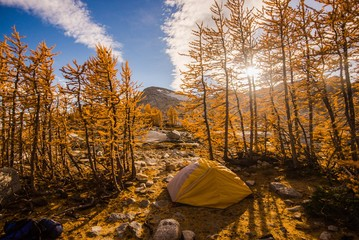 Camping views through larch trees in the Enchantments during fall