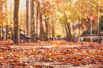 jesień park tło, żółte liście w sezonie jesiennym