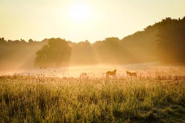 Pferde auf einer Koppel im Morgennebel