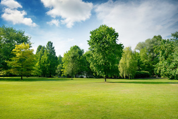 Picturesque green glade in city park. Green grass and trees.