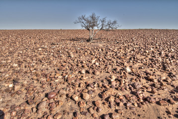 Sturt Stony desert in the Innamincka regional reserve, South Australia.