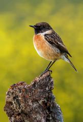 Small bird on a slim branch