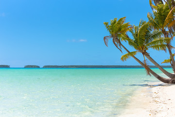 Tropical beach, in French Polynesia, with coconut tree on the turquoise sea