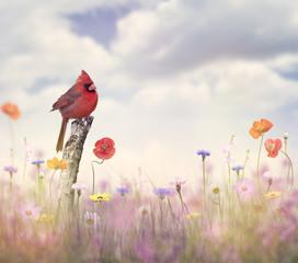 Kardynał ptak w polu kwiat