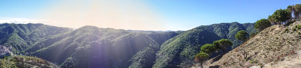Foresta Sila Piccola 736