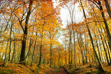 Autumn forest of Dartmoor National Park, a vast moorland in the county of Devon, in southwest England.