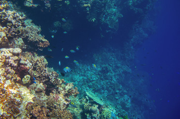 Coral reef wall with tropical fish. Deep undersea landscape.