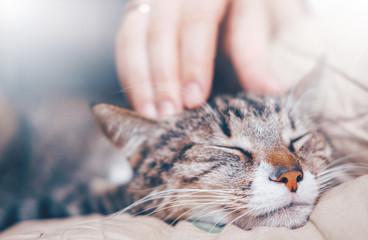 głaskanie ręki kota