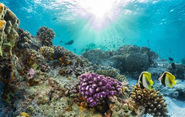 Buntes Korallenriff mit tropischen Fischen auf den Malediven