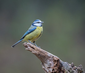 the small birds the forest with its great colorful