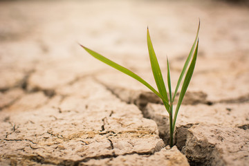 Little green plant on crack dry ground, concept drought