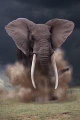 Afrikanischer Elefant Bulle greift an, Loxotonta africana