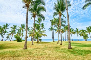 Beach Grand-Anse with coconuts tree, Saint-Pierre, Reunion Island