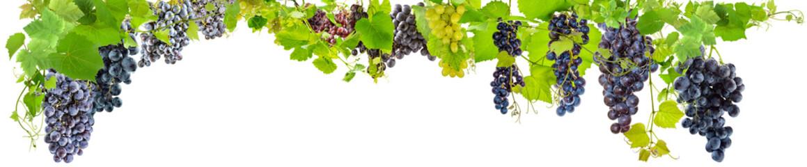 farandole de grappes de raisins, fond blanc