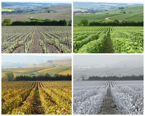 Les quatre saisons de la vigne, en Champagne (France)