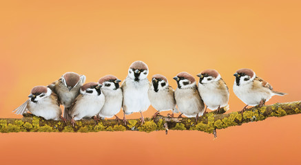 group of little funny birds sitting in a bright Sunny spring Park