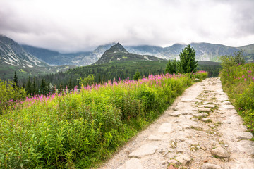 Hiking trail in mountains, landscape with mountain flowers in the summer, Tatra National Park, Poland