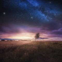 Beautiful landscape with field under sky with starrs