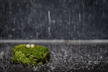 Perłowe kolczyki w deszczu