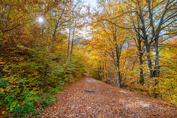 Dark, mysterious and romantic forest with small gravel road covered with colorful - yellow, red, orange leaves. Beautiful nature, mountains in the background. Cliffs in Cheile Rametului, Romania.