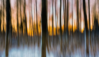 Abstract forest photographed on long exposure