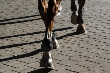 HORSE - Animal is walking along the sidewalk