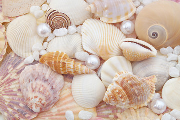 Seashell background, lots of amazing sea shells mixed with pearls and stones