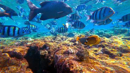 fish swim in the sea