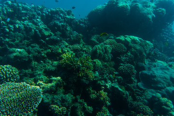 Sea and ocean underwater coral reef background. Marine background